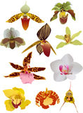 Set of ten isolated orchids Royalty Free Stock Photography