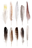 Set of ten straight feathers isolated on white Stock Image