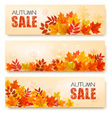 Set Of Three Autumn Sale Banners With Colorful Leaves. And Berries. Layered Vector Royalty Free Stock Photography