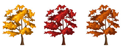 Set of three autumn trees. Vector illustration. Royalty Free Stock Photo