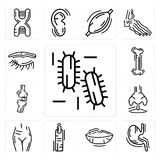 Set of Three Bacteria, Stomach with Liquids, Human Lips, Finger, Female Pubis, Nostril, Bones Joint, Bone, Eyebrow icons. Set Of 13 simple  icons such as Three Royalty Free Stock Photography