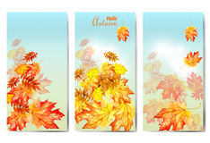 Set of three banners with colorful autumn leaves. vector illustration