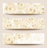 vector set of three  banners with white roses. Royalty Free Stock Photos