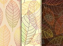 Set of three beautiful leaves seamless patterns Stock Photos