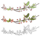 Set with three branches of cherry blossom. Little pink flowers on white background. Royalty Free Stock Image