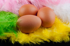 Set of three brown eggs laying in colored feathers. Set of three brown eggs laying in yellow, white, green, rose feathers Royalty Free Stock Image