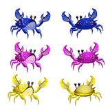 Set of three colorful crab isolated from two sides Stock Image