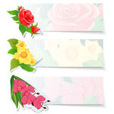 Set of three colorful web banners with different flowers. Red roses bud, yellow daffodils and pink orchid. Royalty Free Stock Image