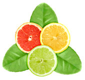 Set of three cross a citrus fruits on green leaf Stock Images