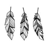 Feathers lines set. Set of three different feathers isolated on white background royalty free illustration