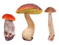 Set of three edible mushrooms on white Stock Images