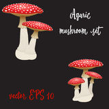 Set of three fly agaric mushrooms isolated on black background. Vector Illustration Stock Photos