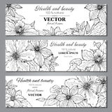 Set of three horizontal banners with beautiful clematis flowers Royalty Free Stock Image