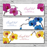 Set of three horizontal cards with orchid Stock Photos