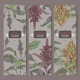 Set of three labels with amaranth, quinoa and chia color sketch. Cereal plants collection. Great for bakery, agriculture, farming design Stock Images