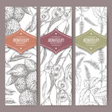 Set of three labels with bergamot, peppermint and eucalyptus sketch. Stock Images