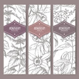 Set of three labels with patchouli, vanilla and cinnamon. Stock Image