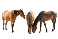 Set of three namibian wild horses portraits Royalty Free Stock Photos