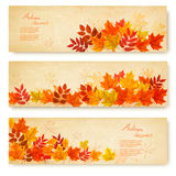 Set of three nature banners with colorful autumn leaves. Vector Stock Image