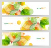 Set of three nature summer vector banners with floral elements. Stock Photos