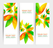 Set of three nature vector banners with floral elements. And place for text Stock Images