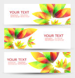 Set of three nature vector banners with floral elements and place for text. Nature header Stock Photos