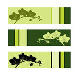 Set of three orchid banners Royalty Free Stock Photos