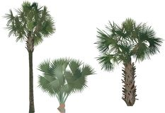 Set of three palm trees Royalty Free Stock Photography