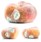 set of three peach with growing mold, isolated on white background royalty free stock photo