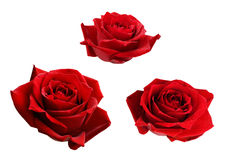 Set of three red rose flowers Royalty Free Stock Image