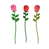 Set of three roses of different colors on a white background. Ve Stock Image