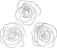 Set of three sketches of roses Stock Images