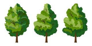 Set of three summer tree Stock Image