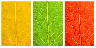 Set of three textures leaves Royalty Free Stock Photos