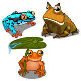 Set of three toads, different colors. Vector. Animals for animation, childrens prints and other design needs. Image in cartoon style isolated on white vector illustration