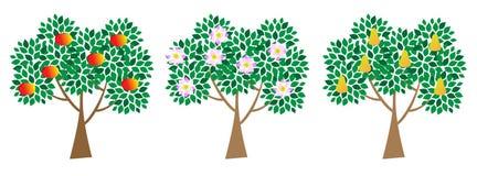 Set of three trees. Fruit trees isolated on white Royalty Free Stock Photos