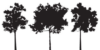 Set of three trees vector silhouette Stock Photo
