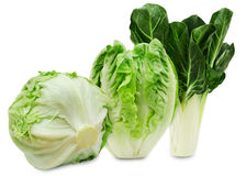 Set of three varieties of fresh lettuce isolated on a white background Royalty Free Stock Image