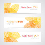 Set of three vector banners  with autumn leaves. Royalty Free Stock Image