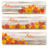 Set of three vector banners with colorful autumn leaves Stock Photo