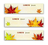 Set of three vector banners with colorful autumn leaves. Stock Photography