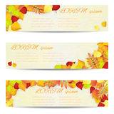 Set of three vector banners with colorful autumn leaves. Royalty Free Stock Images