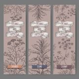Set of three vector banners with coriander, sesame, caraway sketch. Culinary herbs collection. Royalty Free Stock Photography