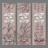 Set of three vector banners with tarragon, sage, laurel. Royalty Free Stock Photos