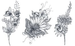 Set of three vector floral bouquets with black and white hand drawn herbs, wildflowers and insects stock illustration