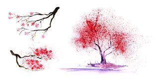 Set of thtree eelements. Abstract color-tree and branches with a magnificent crown. Hand-drawn watercolor illustration. Set of three elements. two spring prime royalty free stock photography