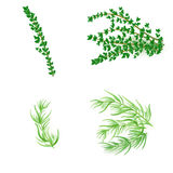 Set of thyme and  tarragonin realistic style Royalty Free Stock Photos