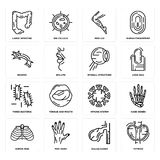 Set of Thyroid, Gallbladder, Human Ribs, Immune System, Three Bacteria, Eyeball Structure, Neuron, Men Leg, Large Intestine icons. Set Of 16 simple  icons such Royalty Free Stock Photo