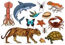 Set Tiere Reptil und Amphibie, Säugetier und Insekt, wilde Schildkröte Gravierte Hand gezeichnet Alte Weinleseskizze Programmfehl vektor abbildung