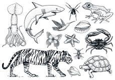 Set Tiere Reptil und Amphibie, Säugetier und Insekt, wilde Schildkröte Gravierte Hand gezeichnet Alte Weinleseskizze Programmfehl lizenzfreie abbildung